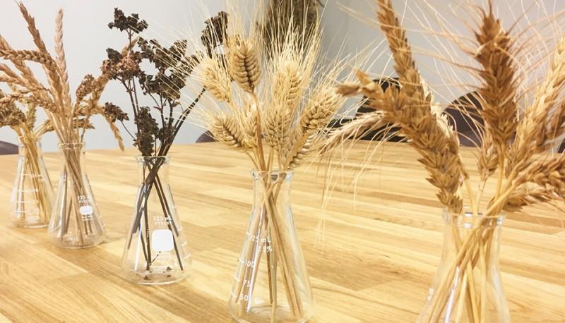 Grain varieties in vases